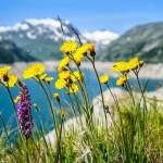 Naturheilmittel, eine Alternative zu herkömmlichen Medikamenten?